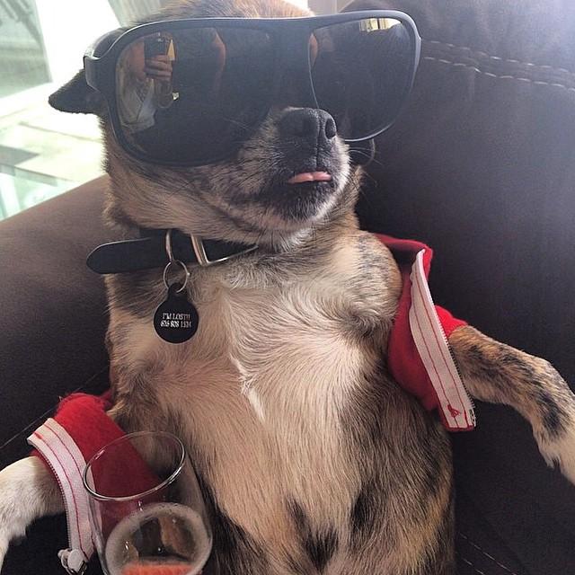 LuLu*s Pet Selfie
