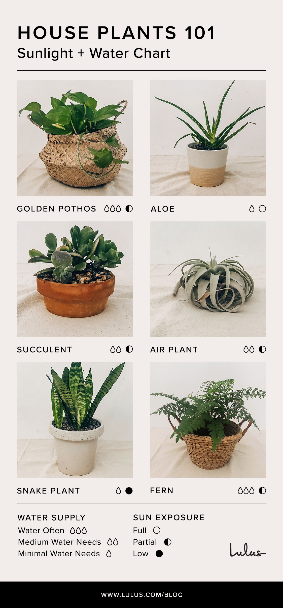 Indoor House Plants 101 An Easy Care Guide Lulus Com Fashion Blog