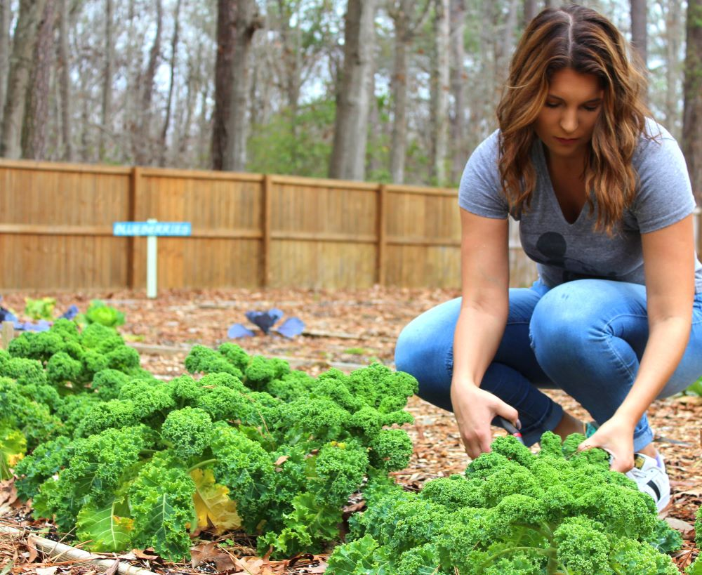 vegetable garden to help people with food insecurity